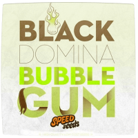 Насіння Black domina bubble Gum